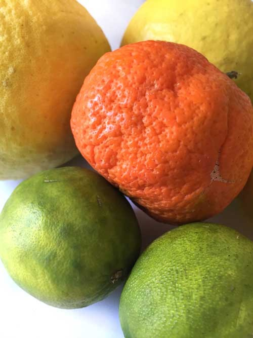 Fresh mandarines and limes from the market. Huge funky lemons from the tree behind our house.