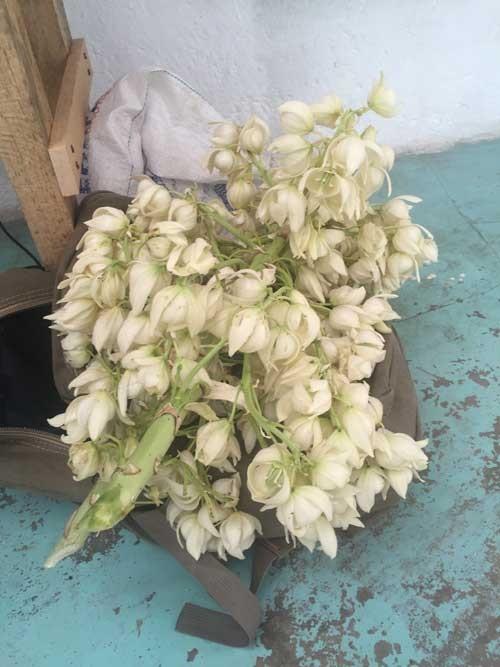 Edible flowers.