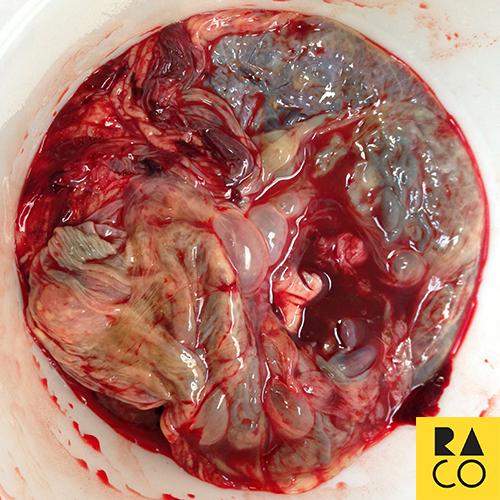 RaCo Life Iza's Placenta